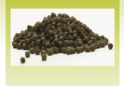 Fish Feed Pellets Manufacturing with Guar Gum